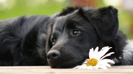 dog, daisy, waiting