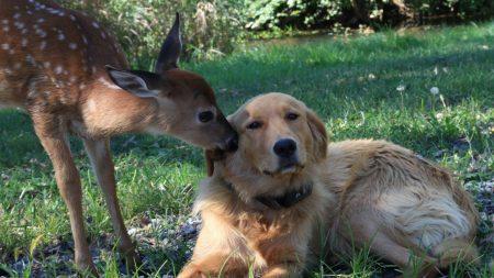 dog, deer, friendship