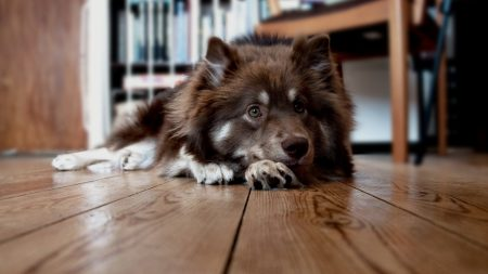 dog, face, floor