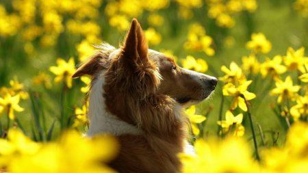 dog, flowers, sunshine