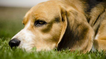 dog, grass, anticipation