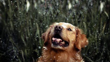 dog, grass, drops