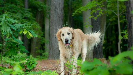 dog, grass, trees
