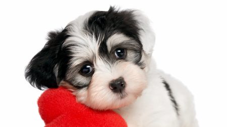 dog, heart, white background