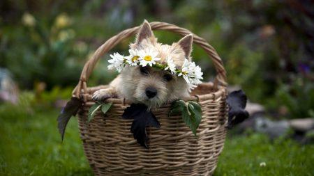 dog, muzzle, basket