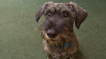 dog, muzzle, collar