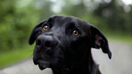 dog, muzzle, dark