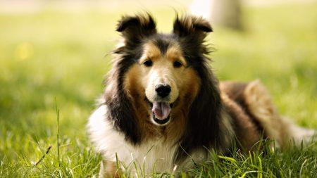 dog, muzzle, fluffy
