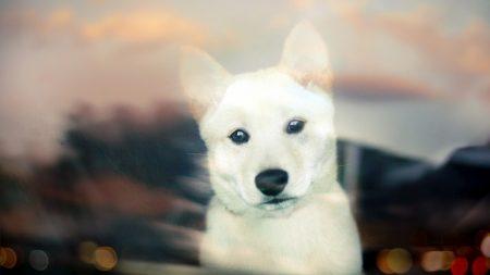 dog, muzzle, glass