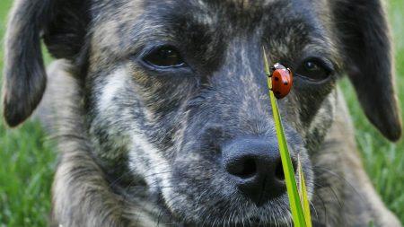 dog, muzzle, ladybug