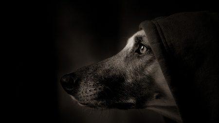 dog, muzzle, profile