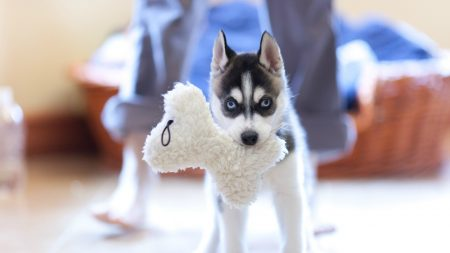 dog, muzzle, puppy