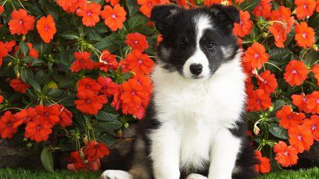 dog, puppy, black
