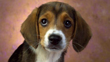 dog, puppy, good