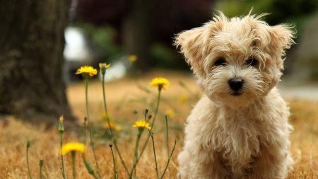 dog, puppy, grass