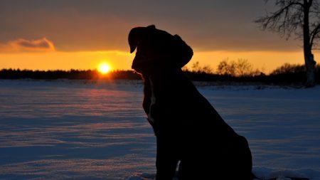dog, puppy, silhouette