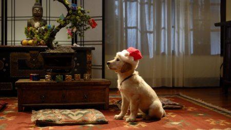 dog, room, holiday