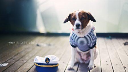 dog, sailor, sitting