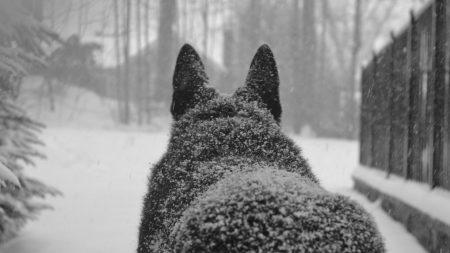 dog, snow, back