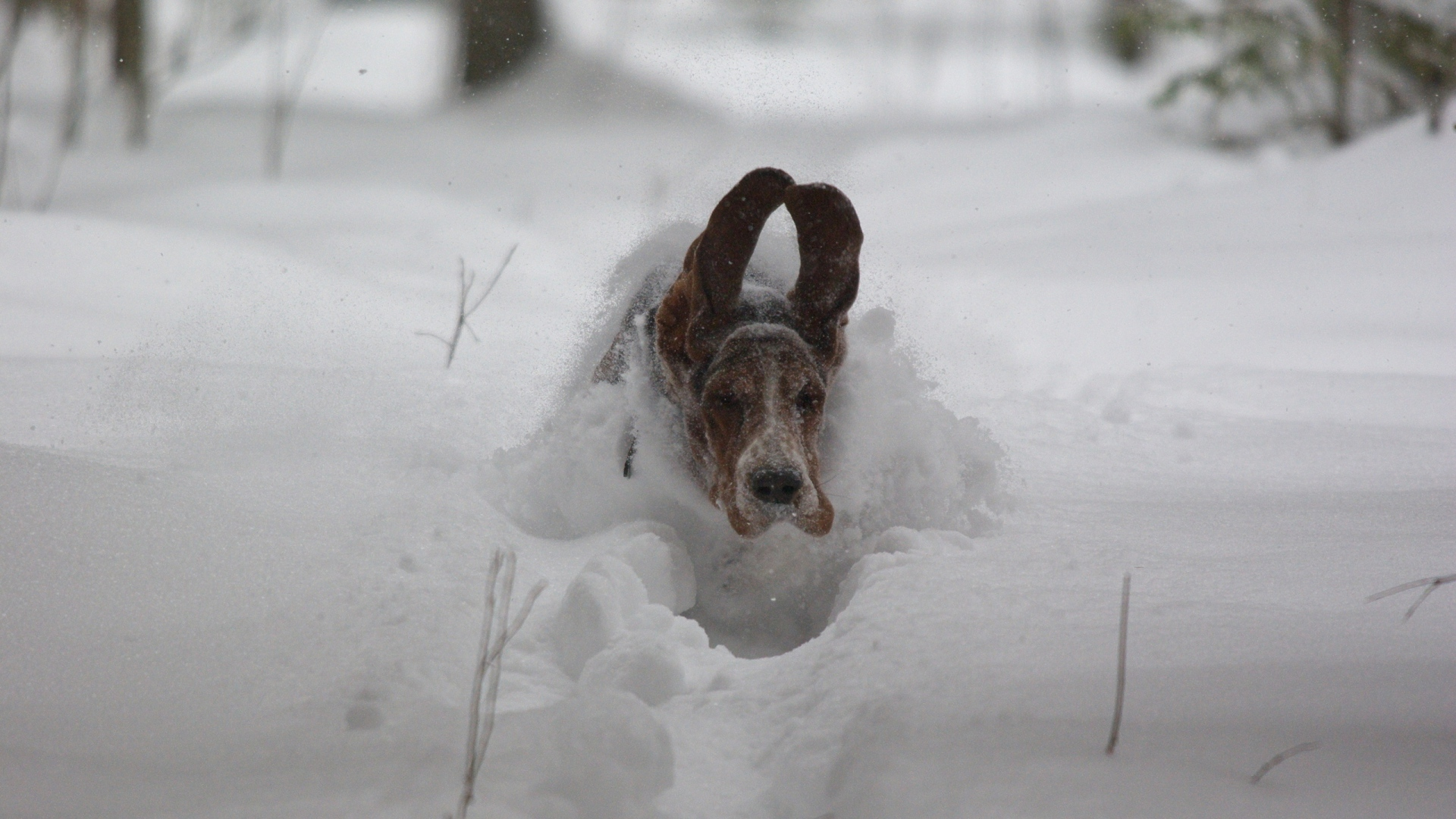 Download Wallpaper 1920x1080 Dog Snow Ears Run Winter Full Hd 1080p Hd Background