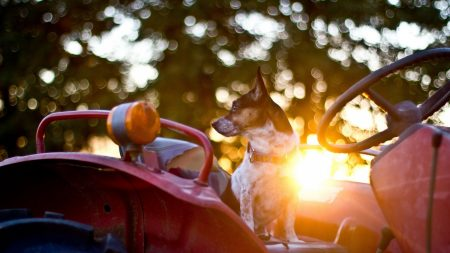 dog, steering wheel, car
