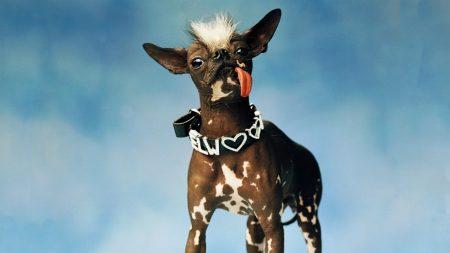 dog, style, fashion