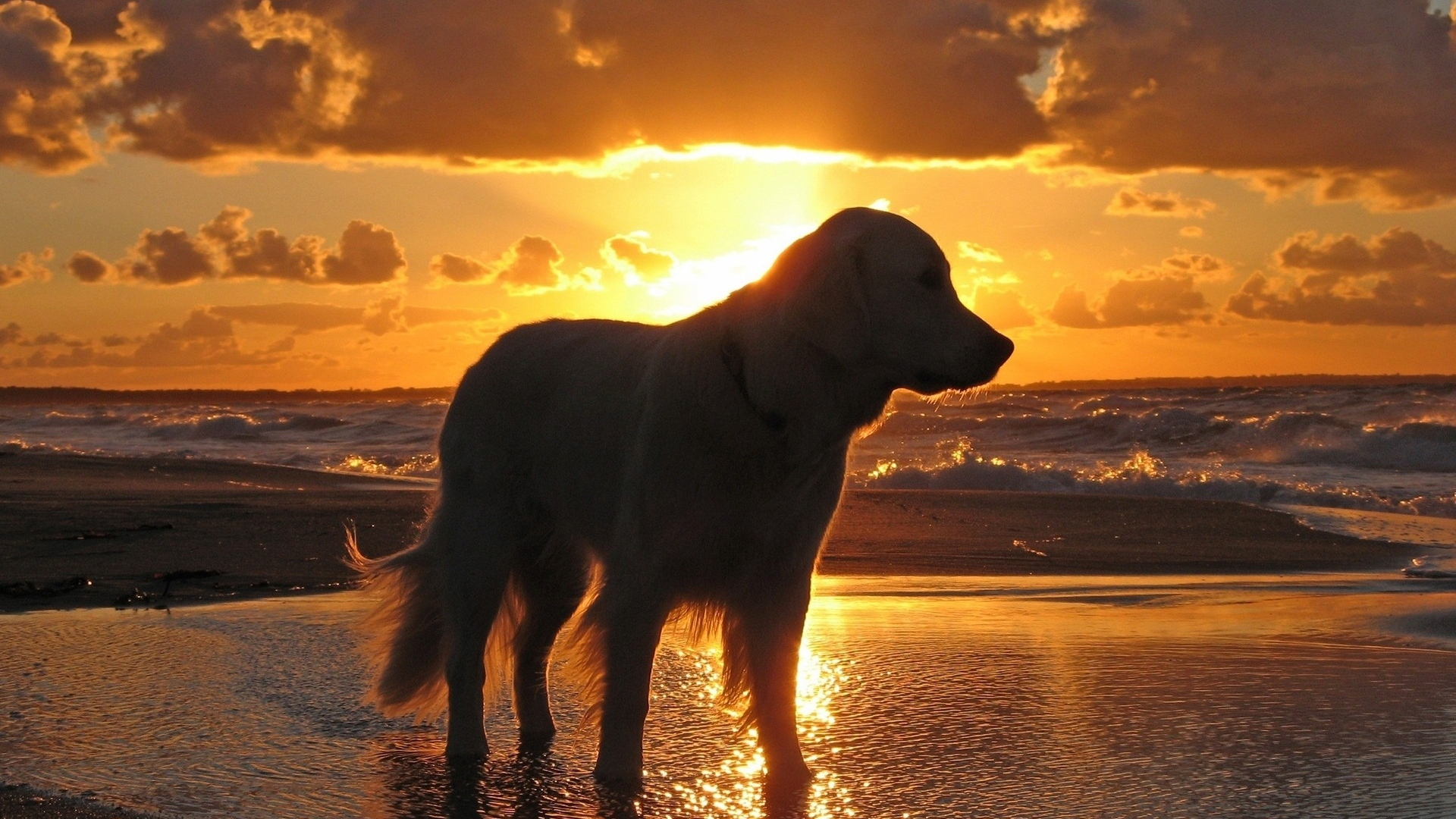 download wallpaper 1920x1080 dog, sunset, beach, sky, sea, shadow