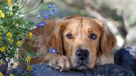 dog, view, sad