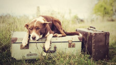 dogs, bags, down