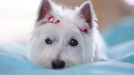dogs, beautiful, decoration