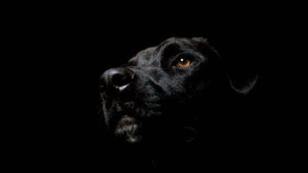 dogs, black, black background