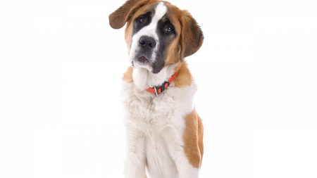 dogs, collar, muzzle