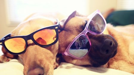 dogs, couple, glasses