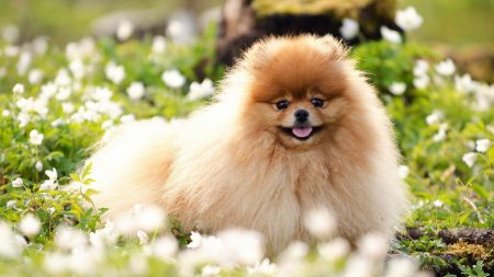dogs, flowers, fluffy