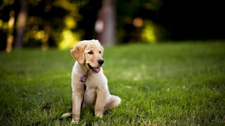 dogs, grass, puppy