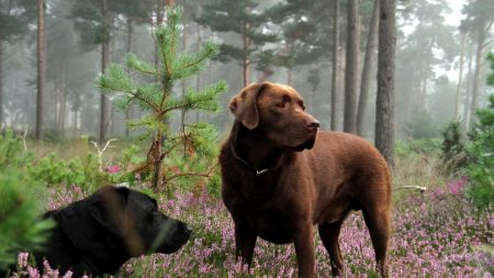 dogs, meadow, grass