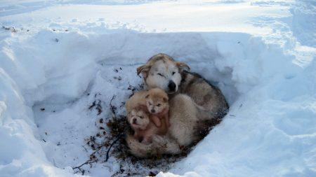 dogs, puppies, snow