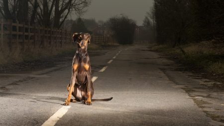 dogs, road, stay