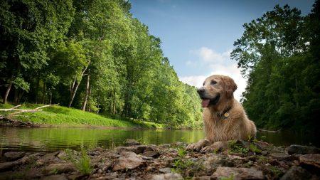 dogs, wet, lake