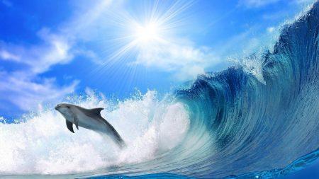 dolphin, sunshine, shine
