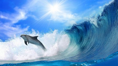 dolphin, waves, light