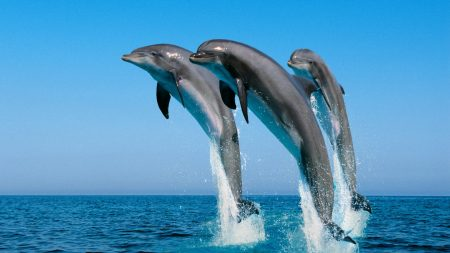 dolphins, jump, water