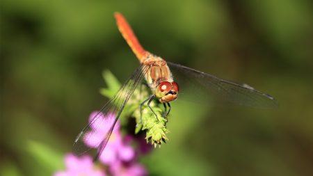 dragonfly, branch, light