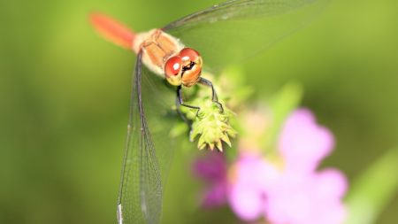 dragonfly, grass, leaves