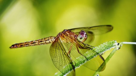 dragonfly, grass, plants