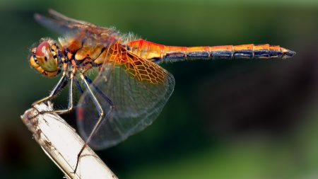 dragonfly, insect, grass