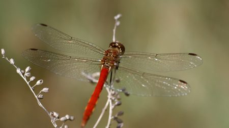 dragonfly, insect, leaves
