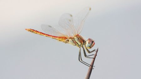 dragonfly, stick, flight