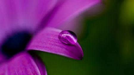 drop, flower, plant