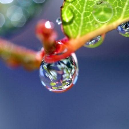 drop, plant, light